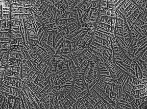 wpid-salzkristalle9.jpg