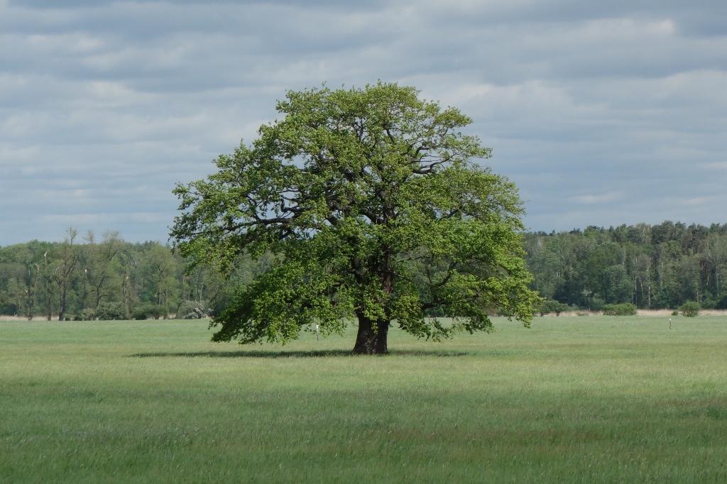 Weisheit #3 – aufBäumen
